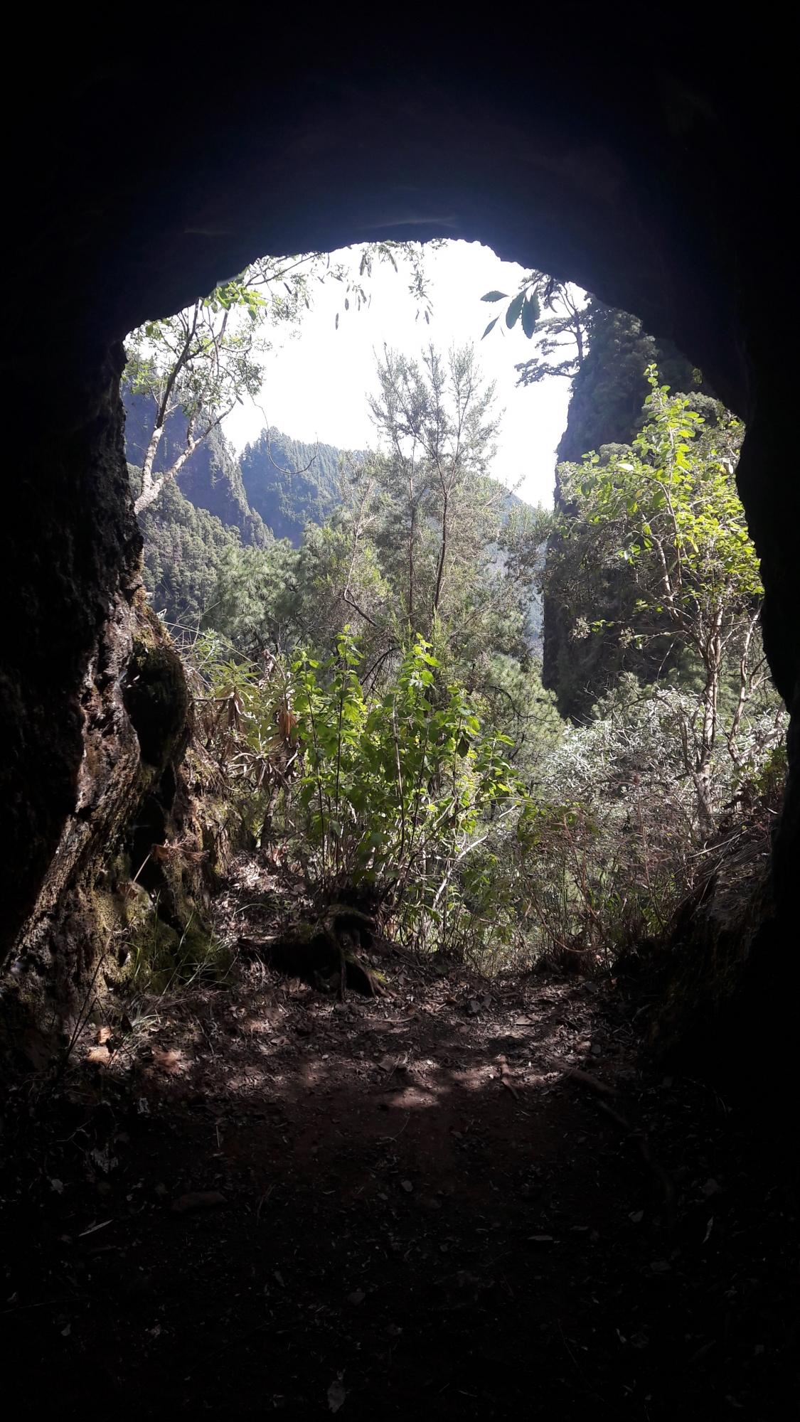Los nacientes de Marcos y Cordero (La Palma). Foto: J.J. Rodríguez Lewis