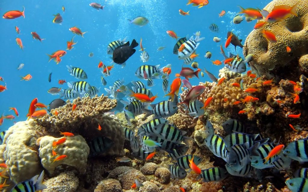 Foto: Arrecifes coralinos, Banco de La Concepción, Isla de Lanzarote.