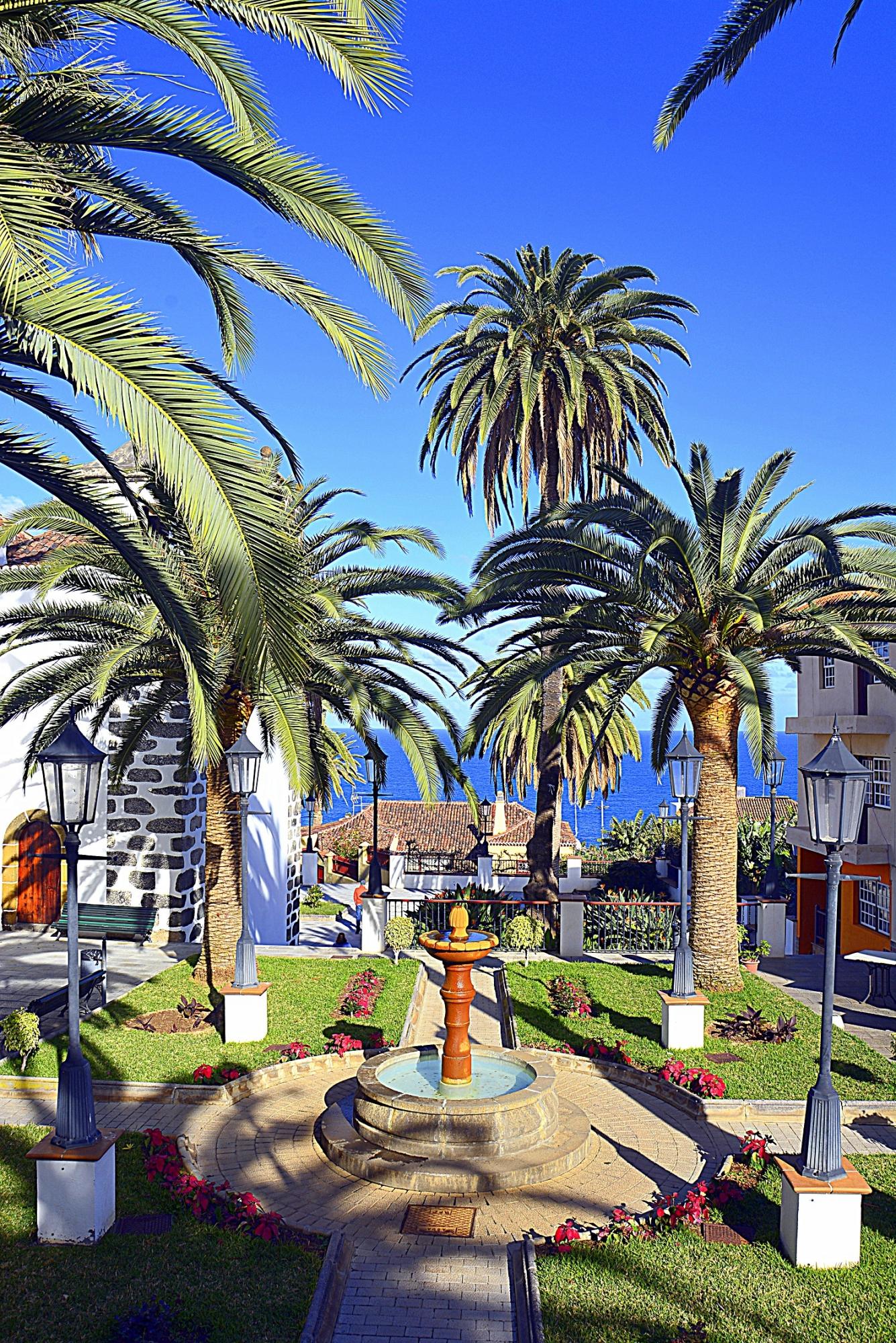 Jardin palmeras