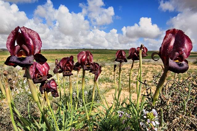 Iris Reserve